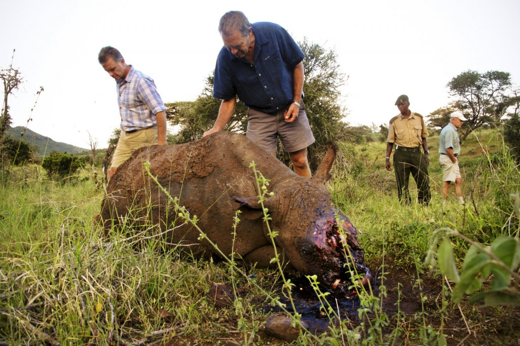 Ian Craig inspecting a poached Rhino